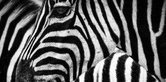 black-czy-white-związki-frazeologiczne-angielski