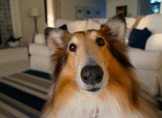 top-dog-słownictwo-angielski