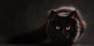 kocie-słownictwo-po-angielsku-kot