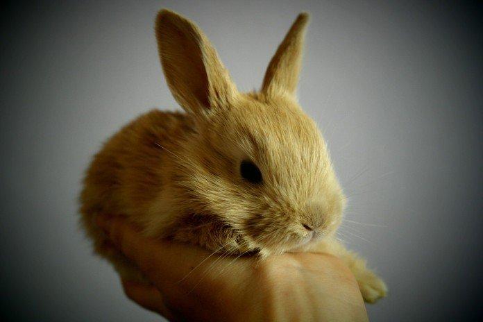 nieformalne-angielskie-słówka-rabbit-on